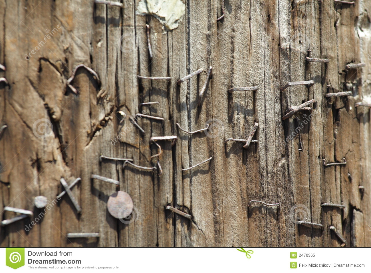 Old staples in a wood pole royalty free stock photo for Wood floor nails or staples
