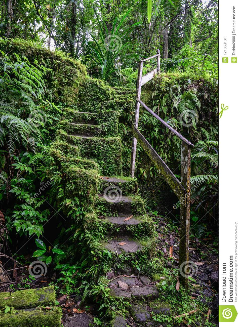 Old stone stairs in overgrown forest garden