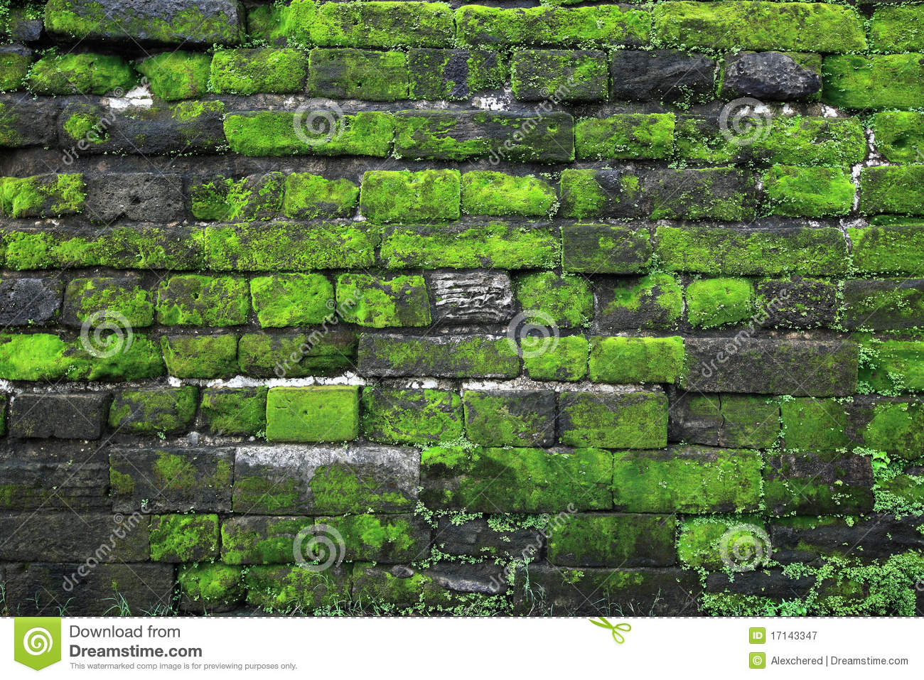 texture of old stone wall covered green moss in fort rotterdam makassar indonesia stock image. Black Bedroom Furniture Sets. Home Design Ideas