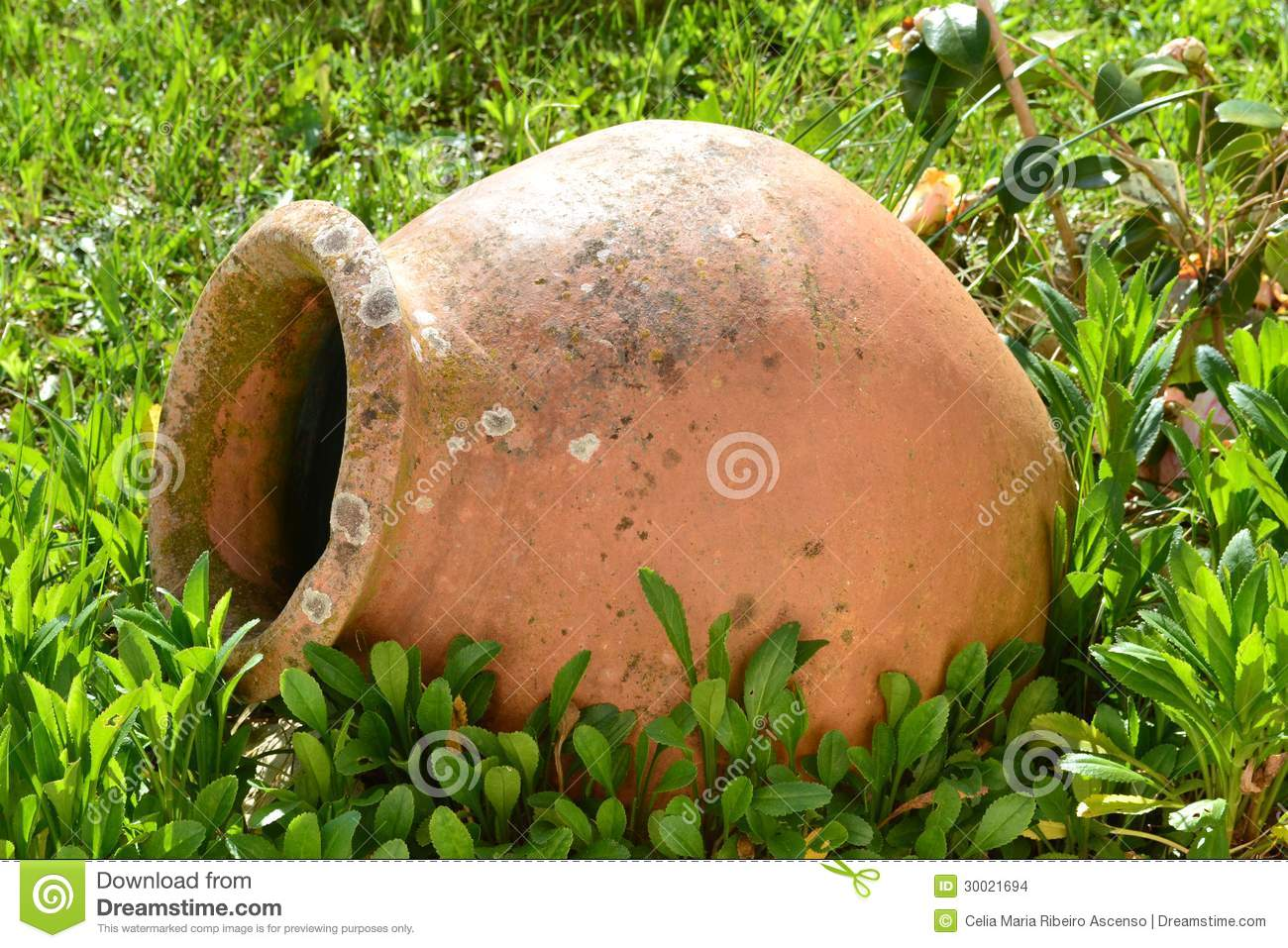 Terracotta vase on the lawn stock photo image 30021694 terracotta vase on the lawn reviewsmspy
