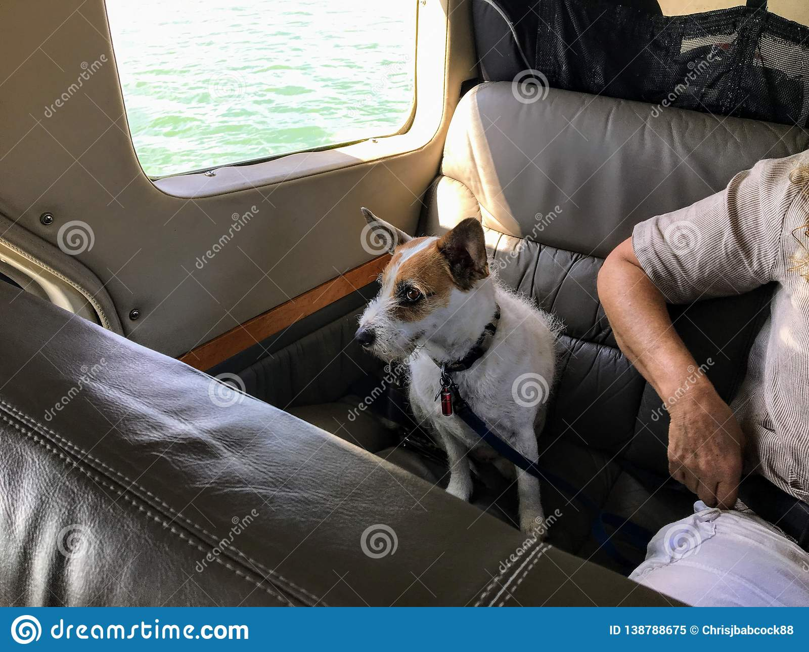 An old terrier dog seated in a water plane beside his owner ready for take off, in Vancouver