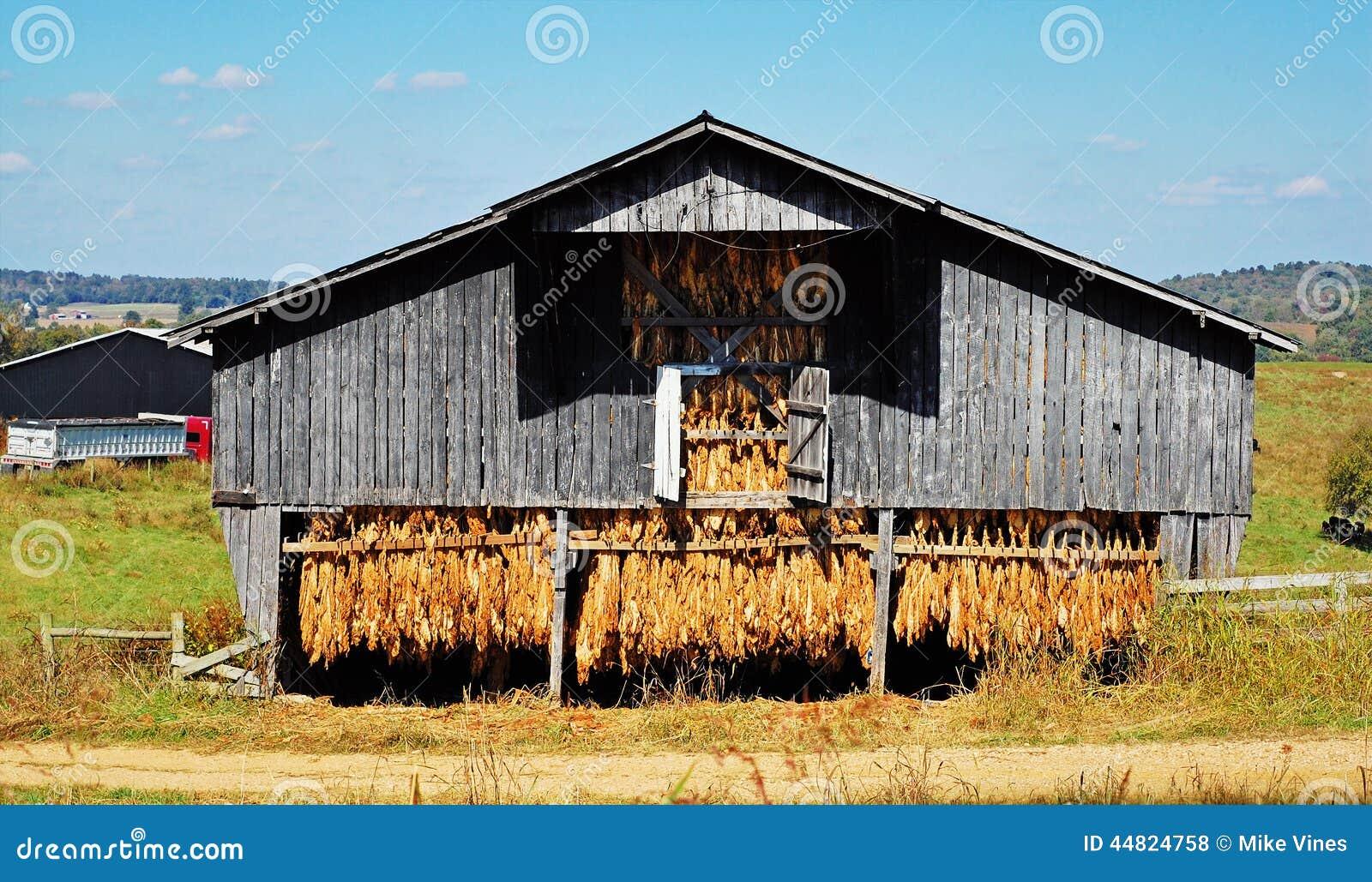 Old Tobacco Barn Stock Photo Image 44824758