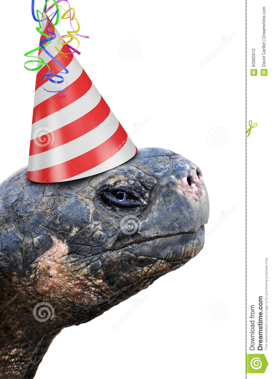 old tortoise wearing red and white striped birthday party