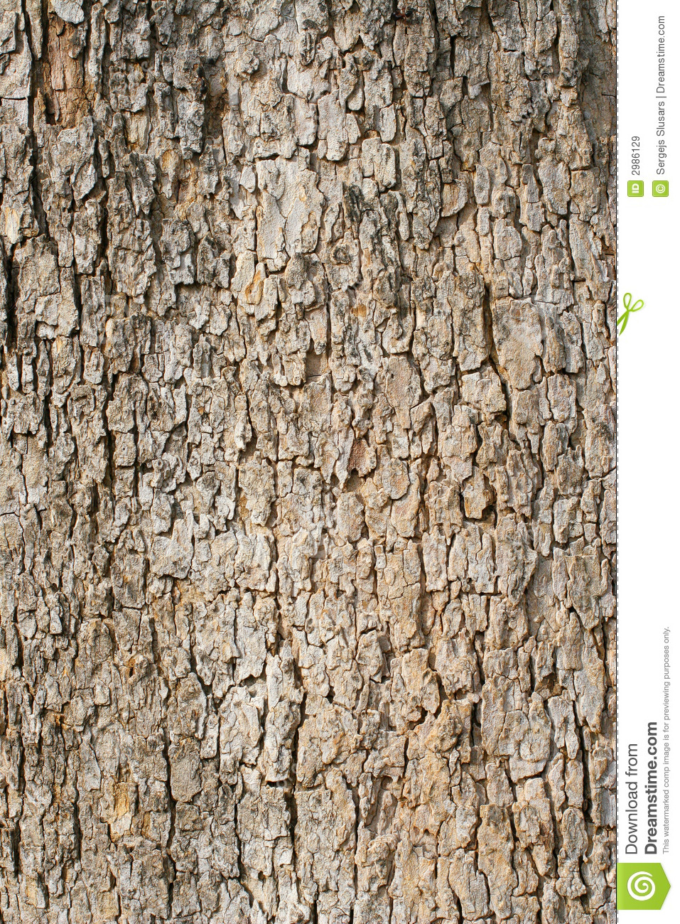 Old Tree Bark U0026 39 S Fragment Royalty Free Stock Images