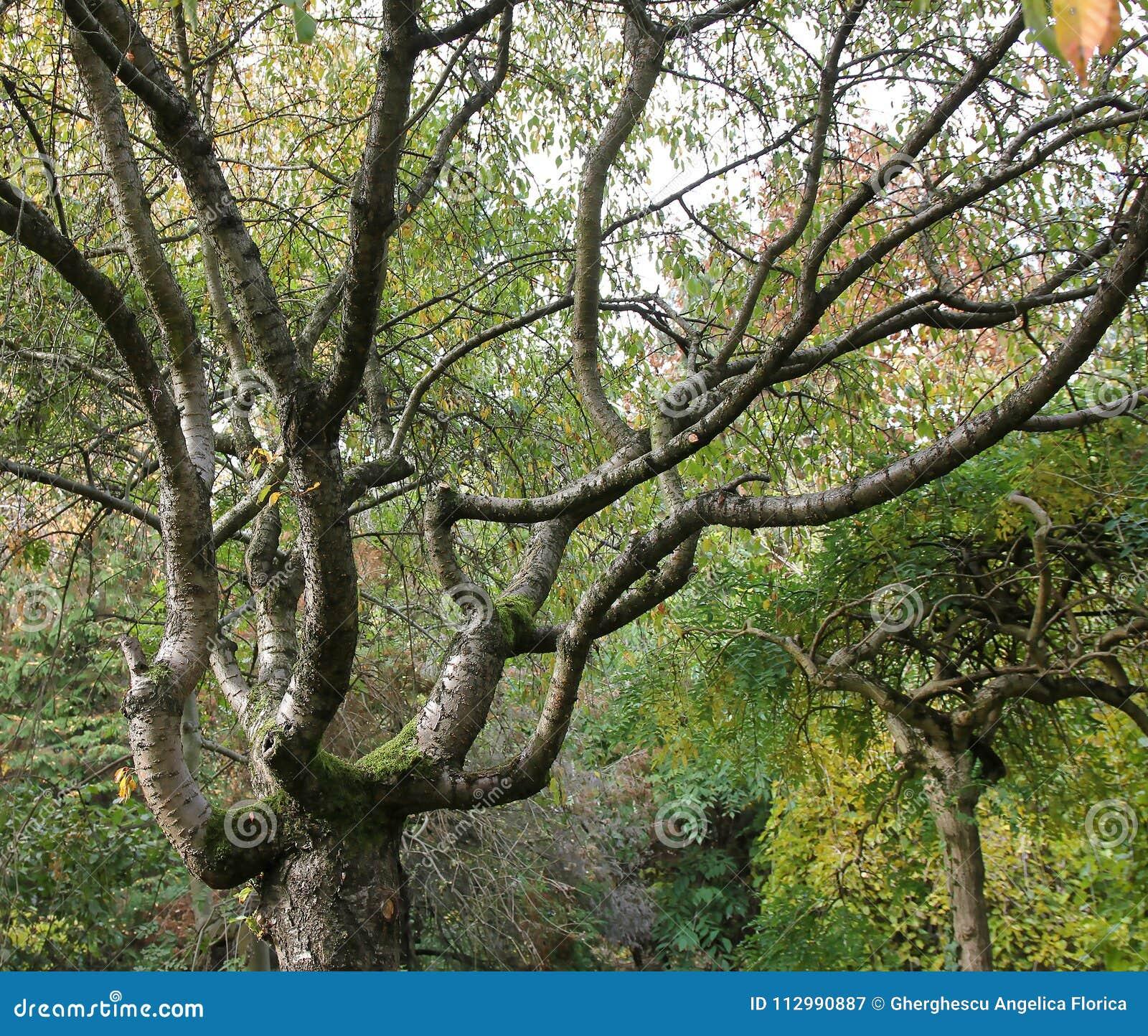 Old tree at botanical garden