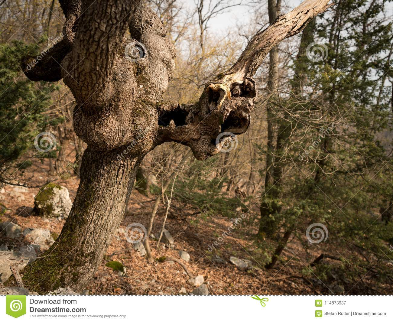 An old tree with cavities and holes