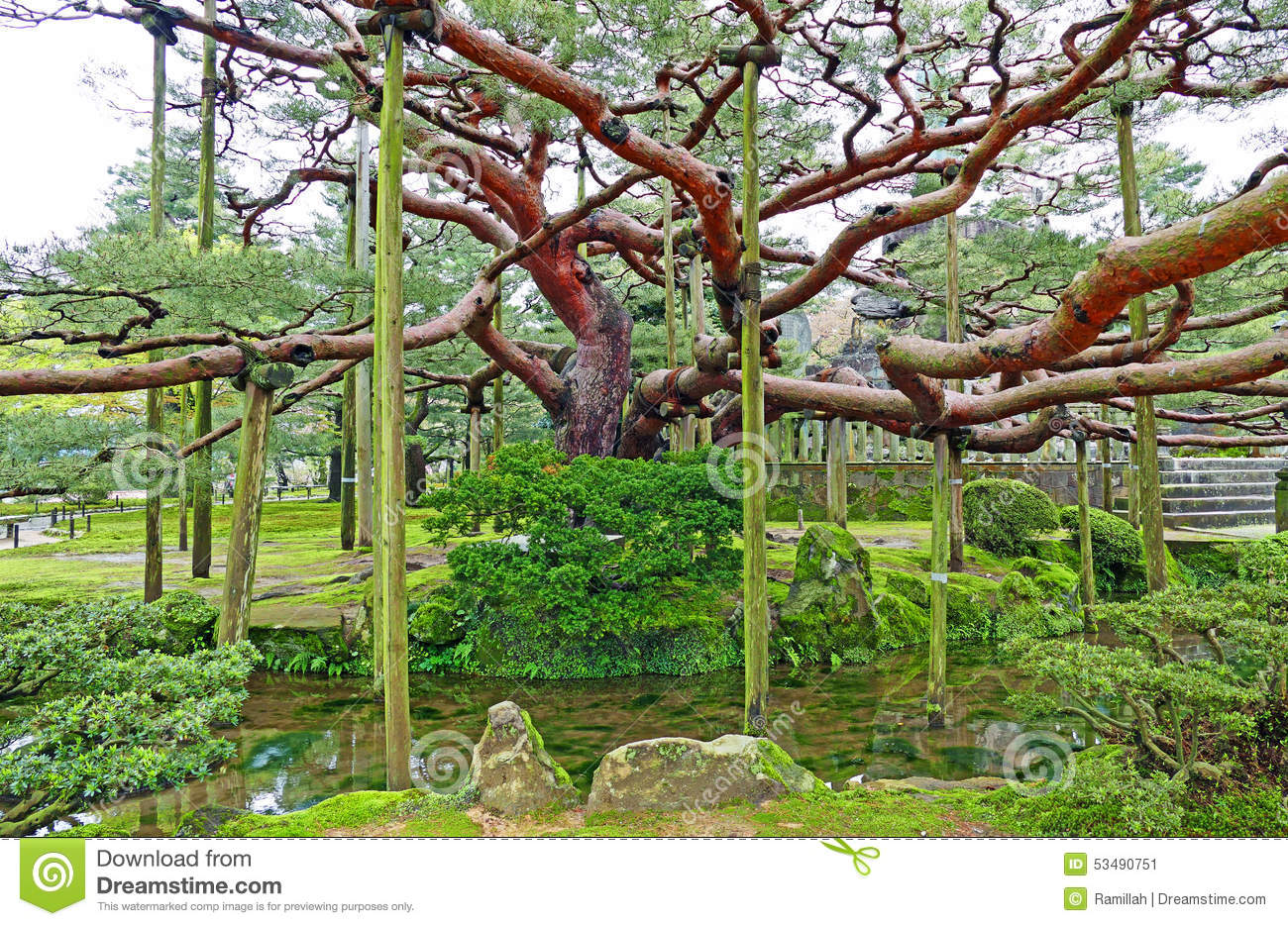 Old Tree Inside Kenrokuen Garden In Kanazawa, Japan Stock Photo - Image: 5349...