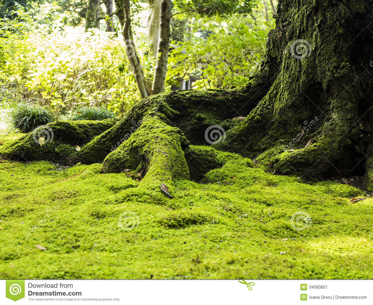 Old Tree With Moss Stock Image Image 34583851