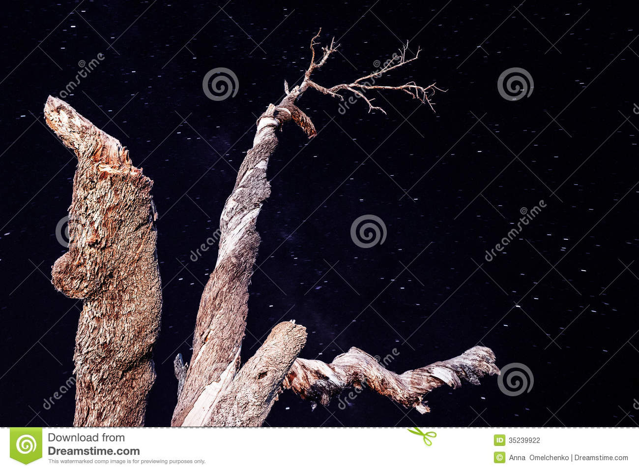 Tree on starry sky background lonely dry wood in the night dark sky