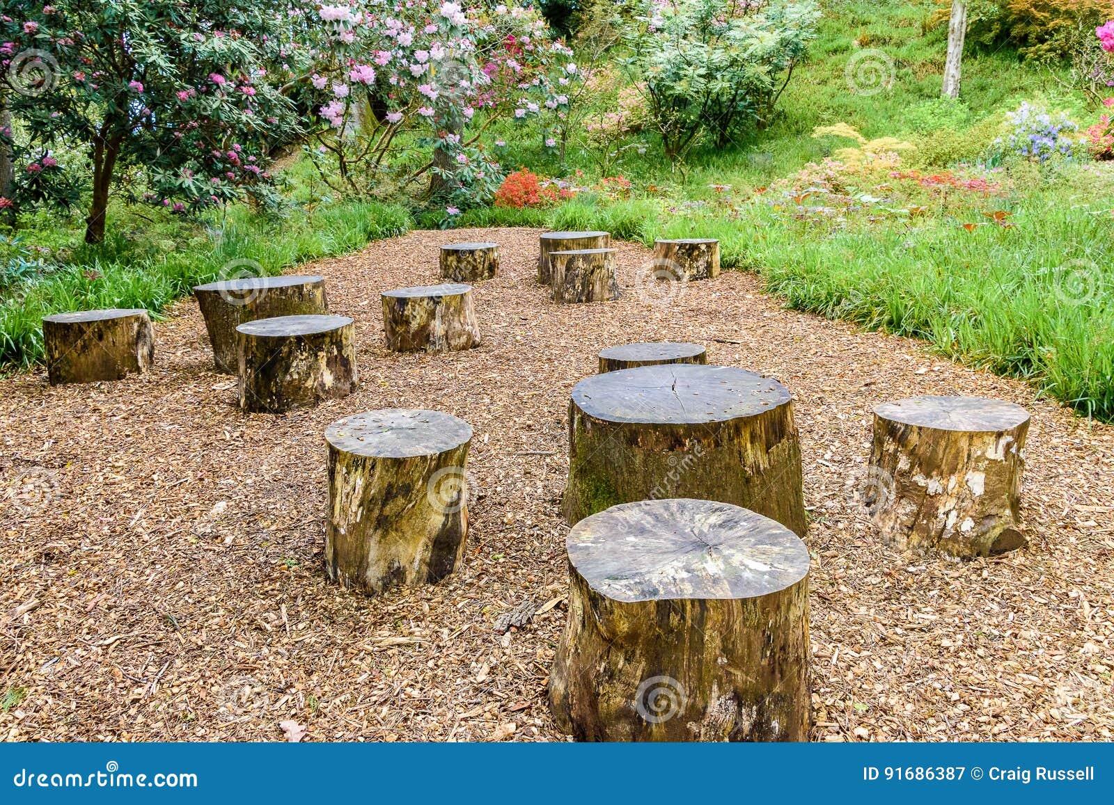 Old Tree Stumps Stock Image Image Of Nobody Decoration 91686387