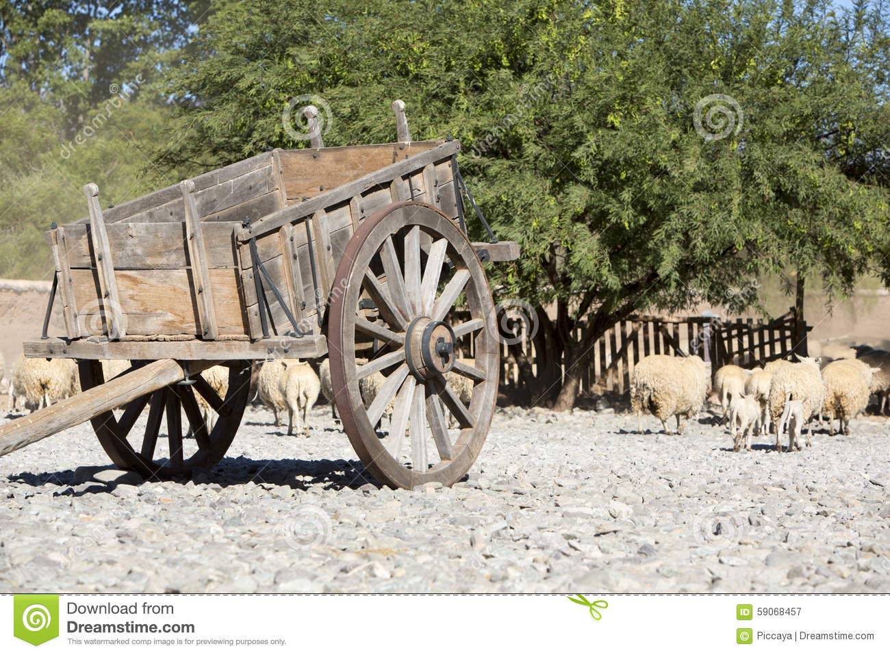 Old vintage horse carriage with goats, agriculture in Argentina.