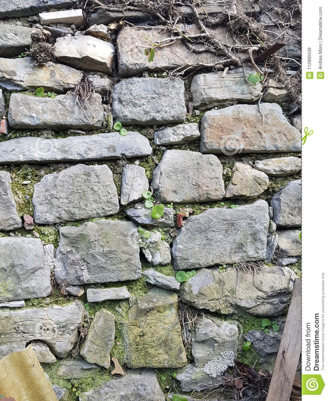 Old wall Stone Grey plant