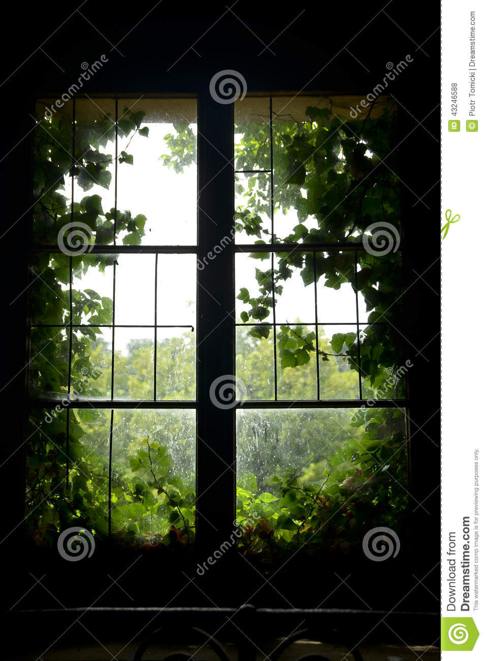 Old window with green leaves