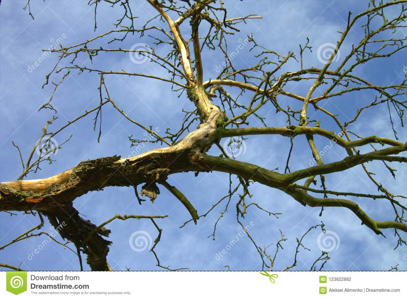 An Old Withered Tree Against A Blue Sky. Stock Photo ...