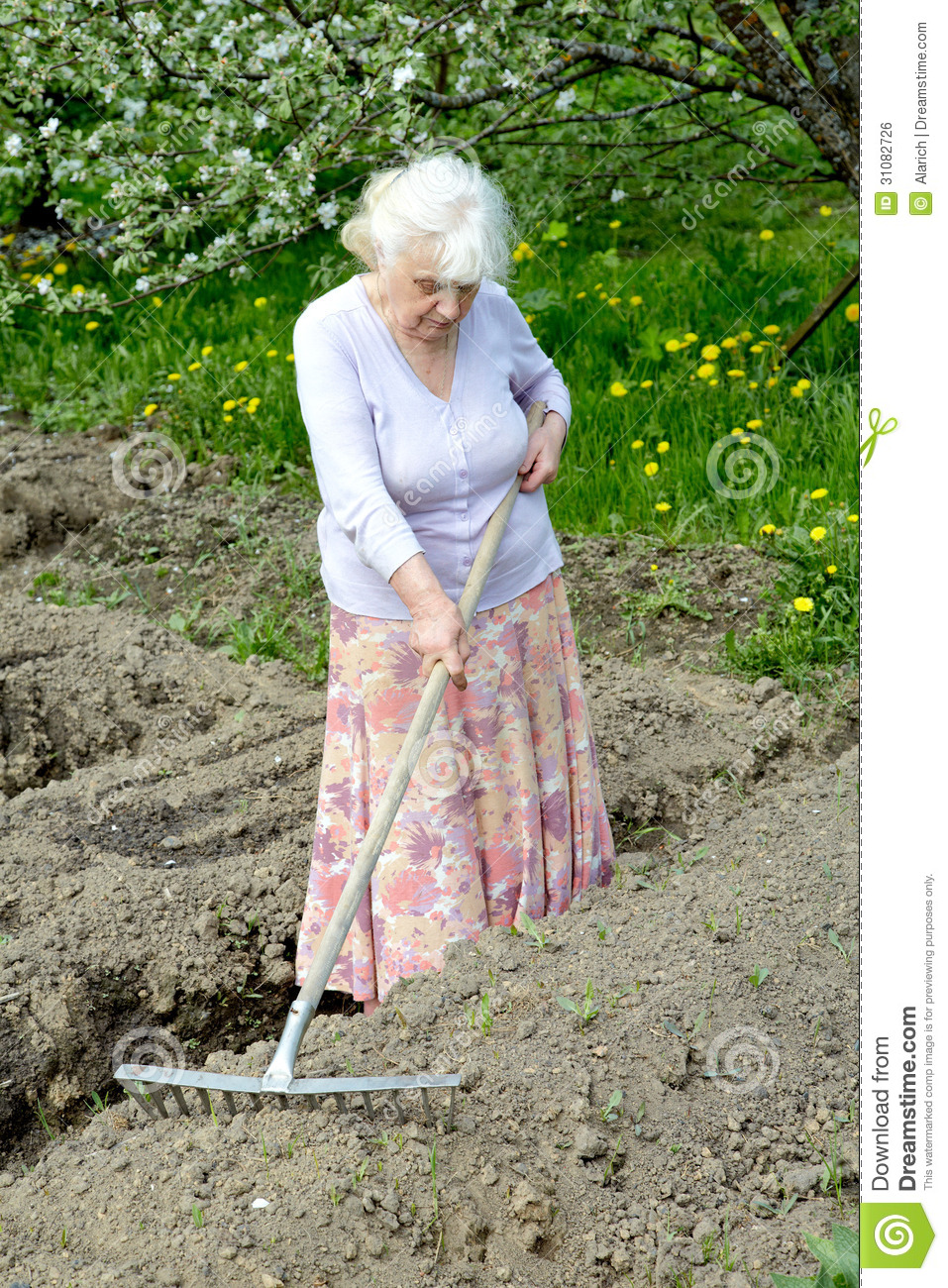 The Old Woman Works In A Blossoming Garden Royalty Free