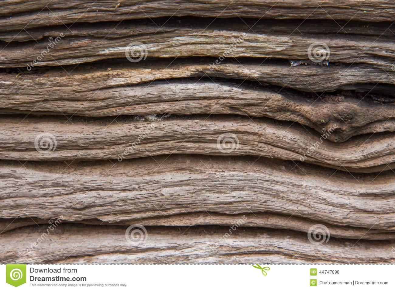 Old wood log texture stock photo image