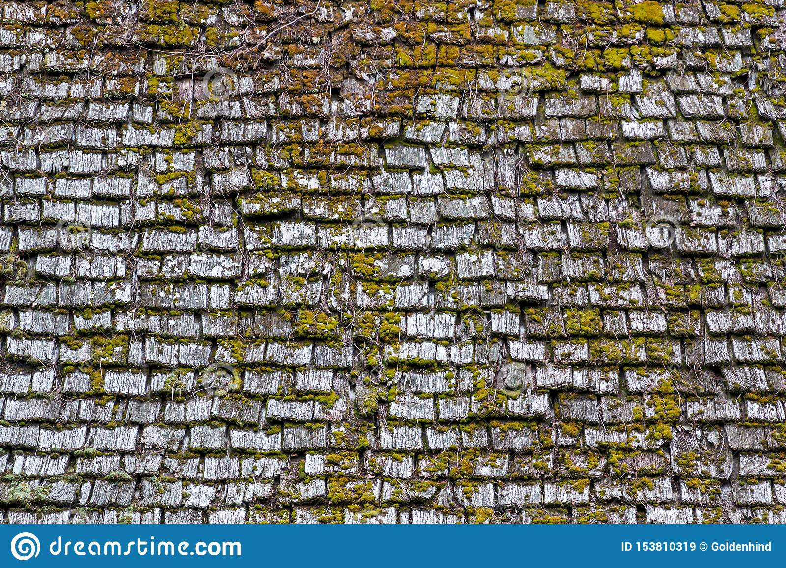 Old wood roof surface with green moss on it background texture