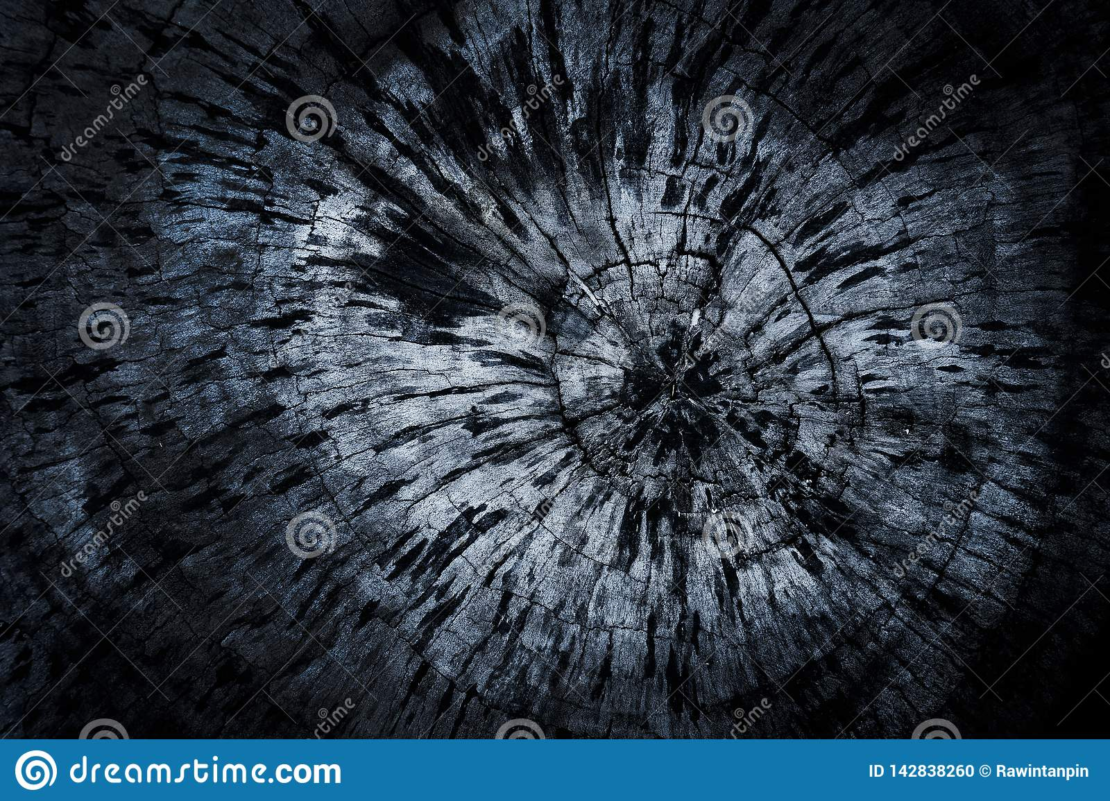 Old wood texture background tree rings old wood texture background