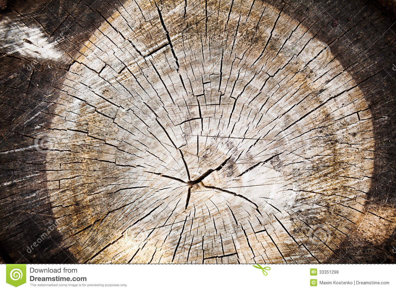 Old Wood Texture Of Cut Tree Trunk Royalty Free Stock