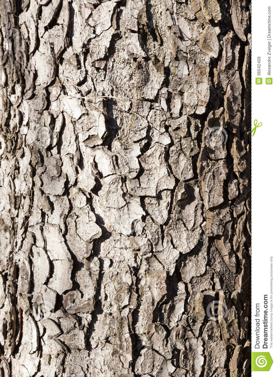 Wood From Trees ~ Old wood tree royalty free stock images image