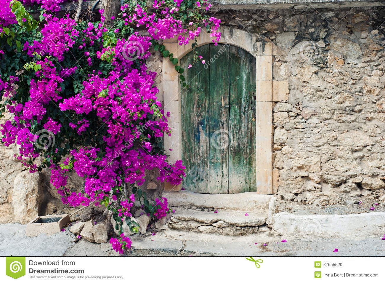 Old wooden door and bougainvillea