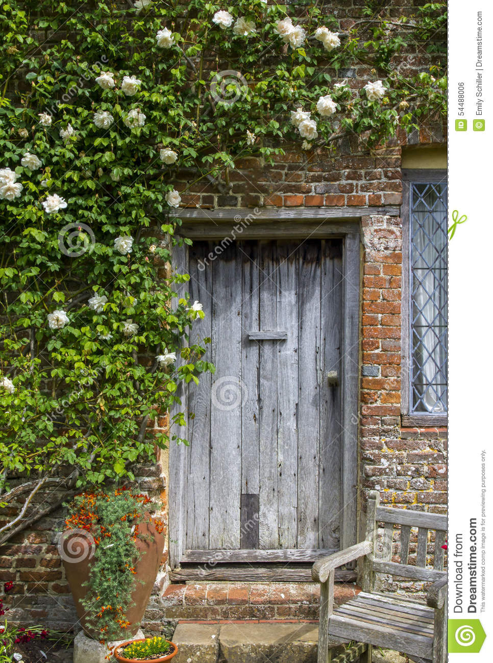 Old Wooden Door Framed By White Roses Stock Photo - Image ...