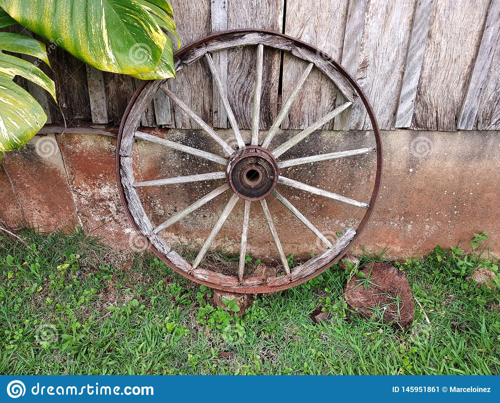 Old wooden ox cart wheel of a farm shed