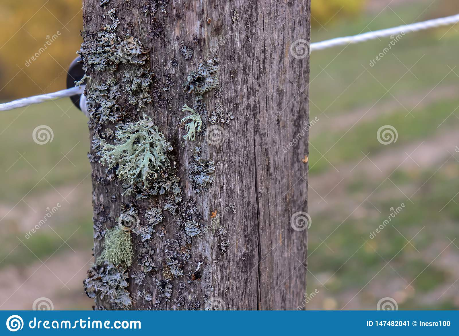 Old wooden rustic fence post with moss and wires