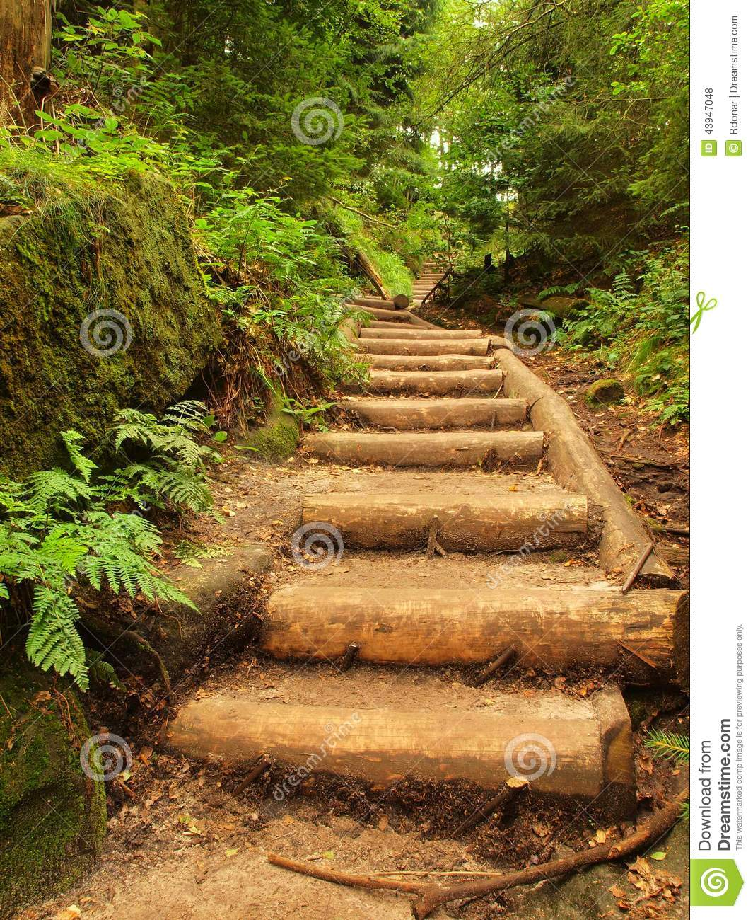 Backyard Forest Management : Old wooden stairs in overgrown forest garden, tourist footpath Steps