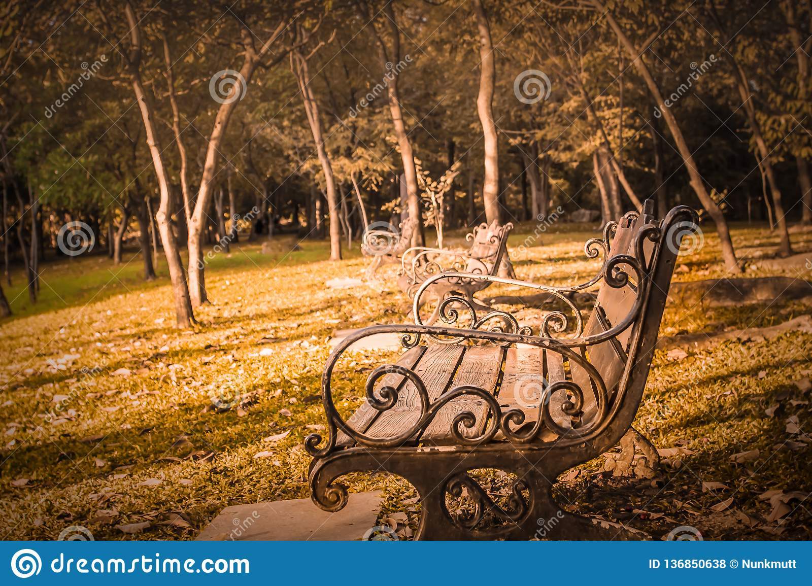 Old Wooden Vintage Bench Style In Park Summer Morning Lifestyle