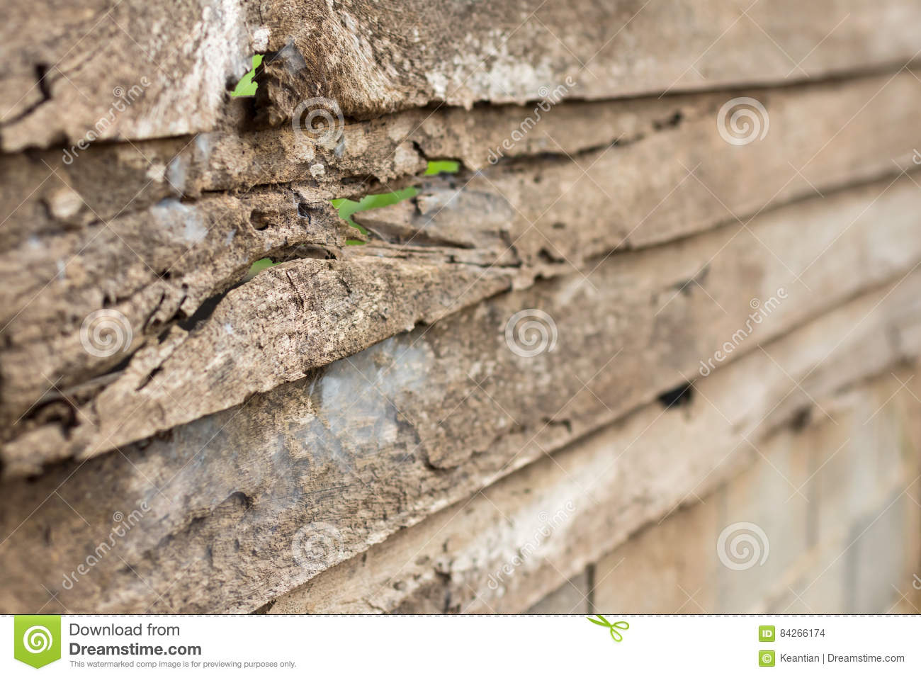 Blurred House blurred termites damaged to the books stock photography cartoondealer com 55603742