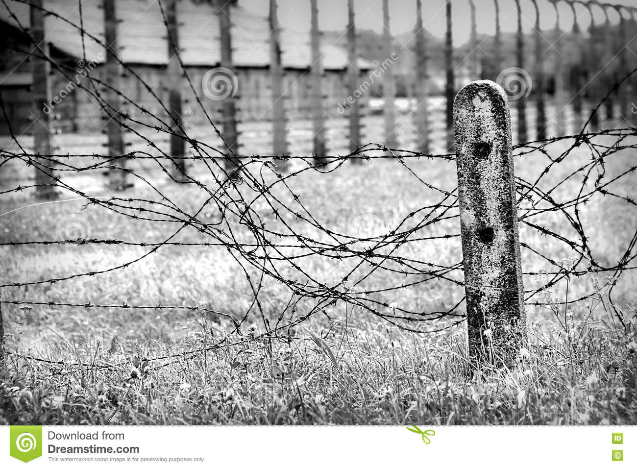 Old Worn Barbed Wire On A Field, Black And White. Stock Photo ...