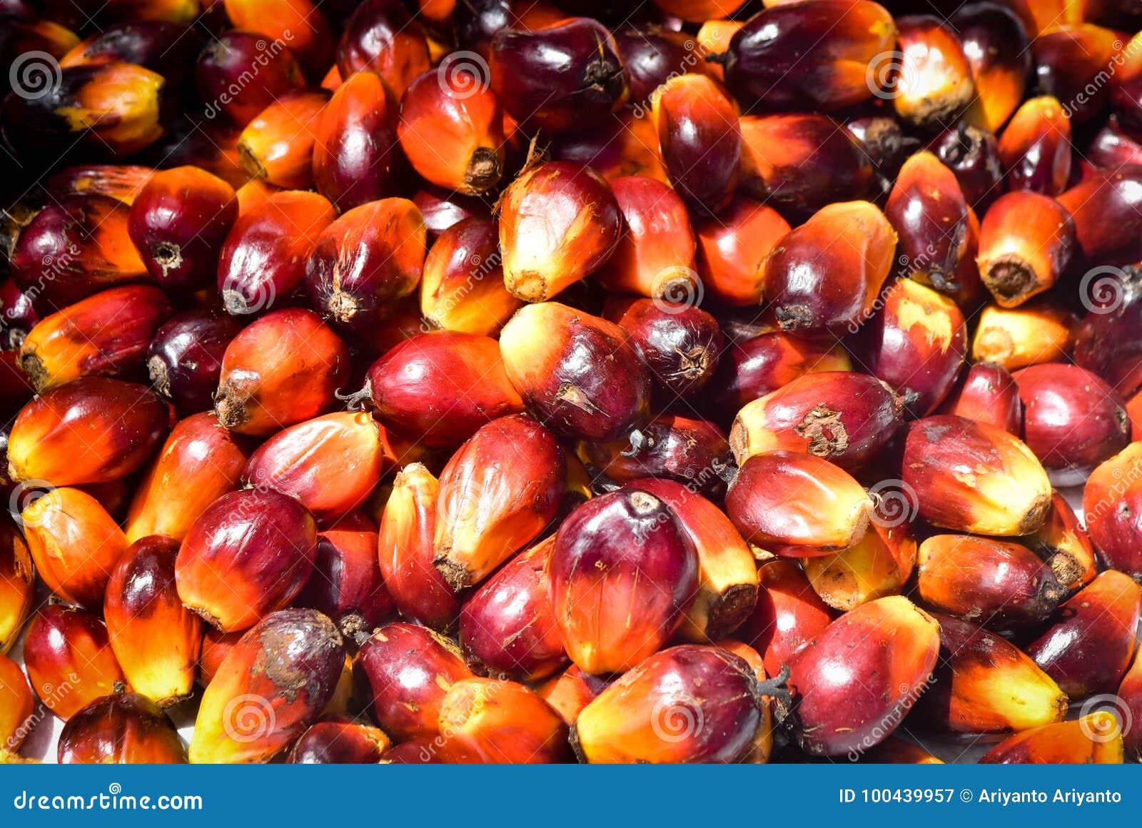 Olej Palmowy owoc