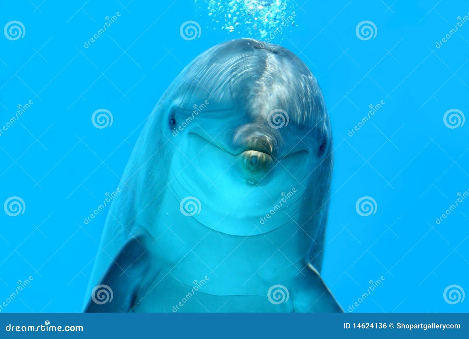 Olhar do golfinho