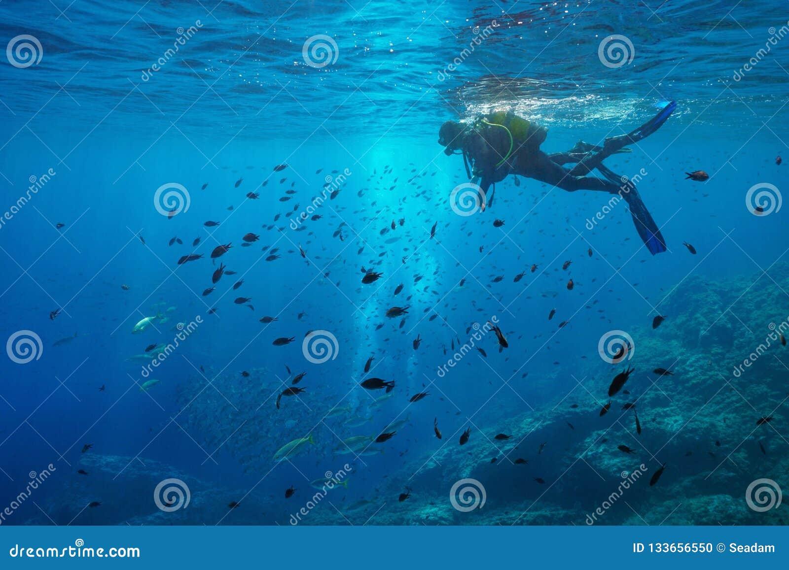 Olhar do mergulhador de mergulhador no banco de areia do mar subaquático dos peixes