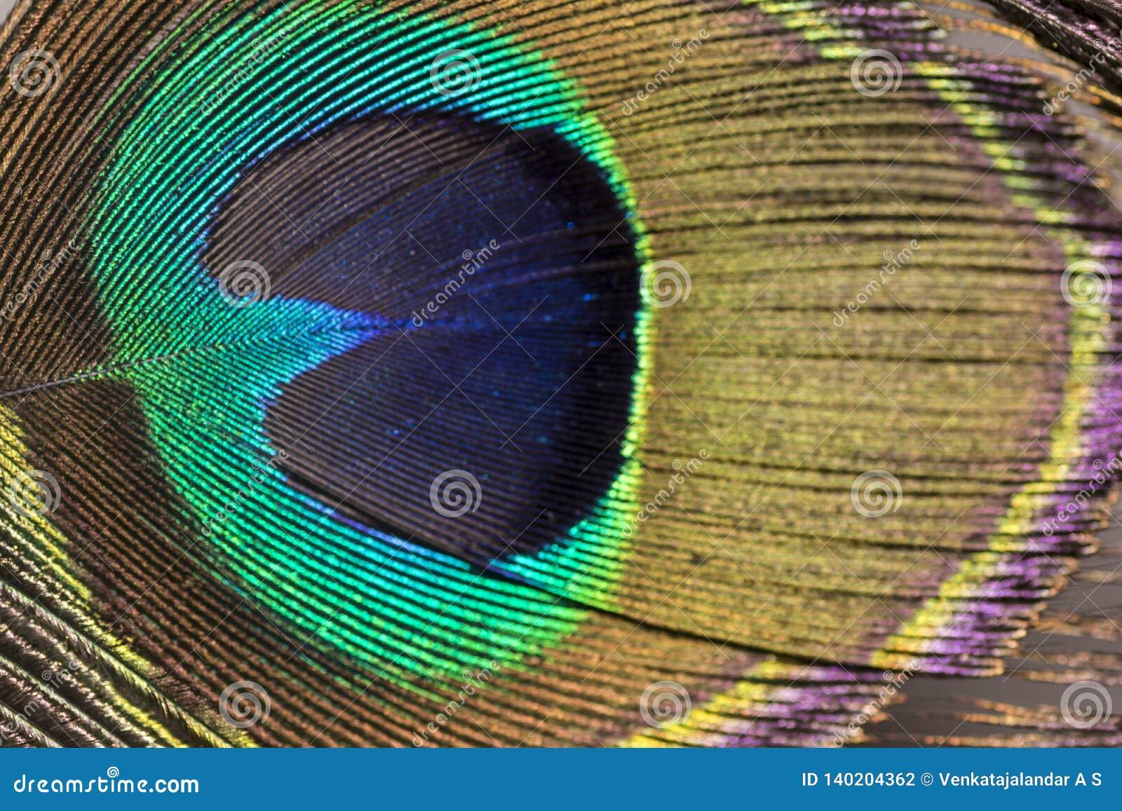 Olho de brilho de uma pena do pavão - feche acima