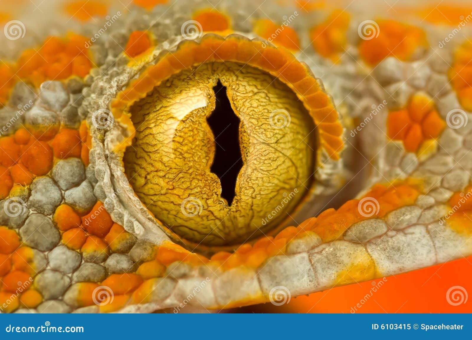 Olho de um Gecko de Tokay