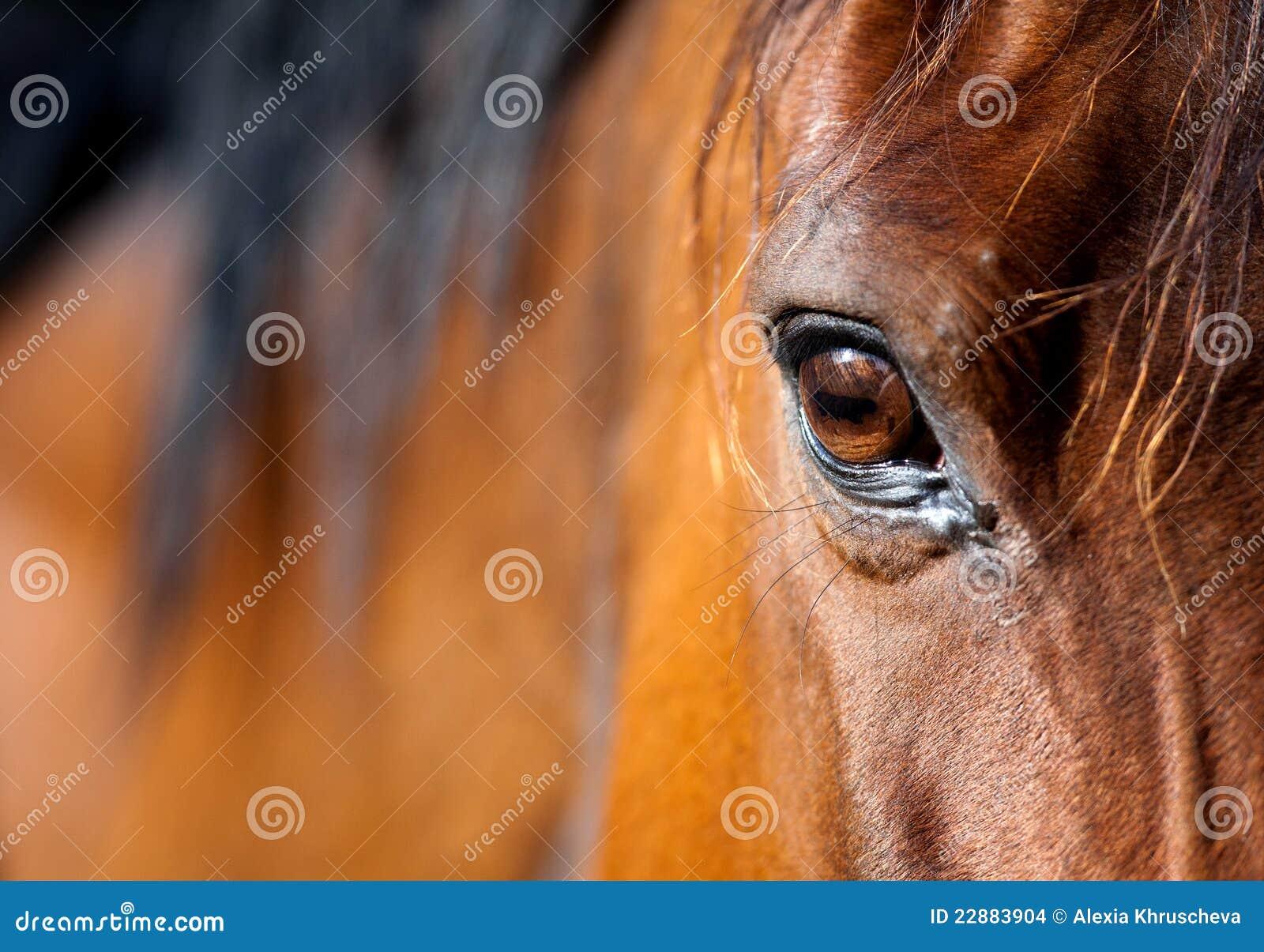 Olho do cavalo