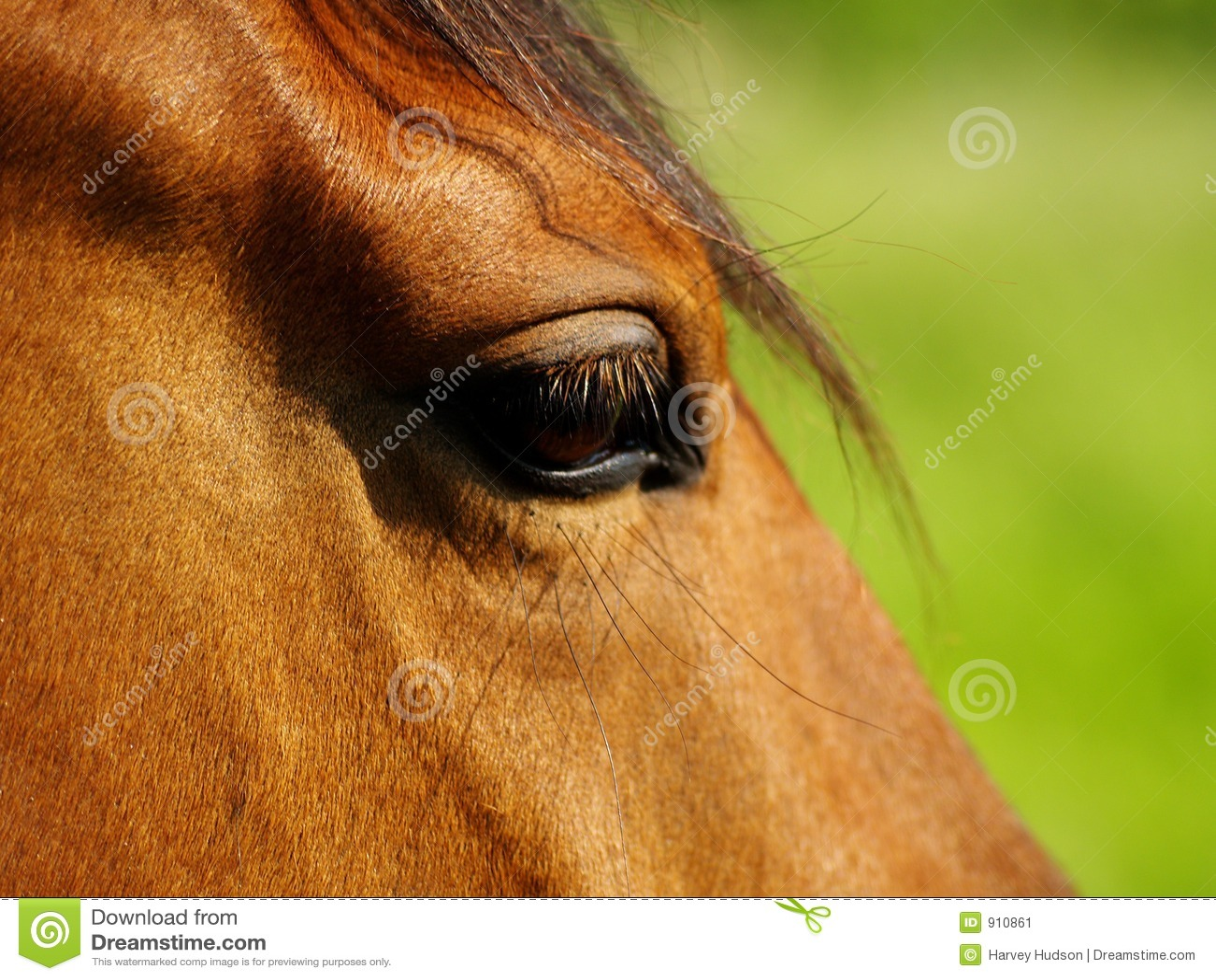 Olho do cavalo.