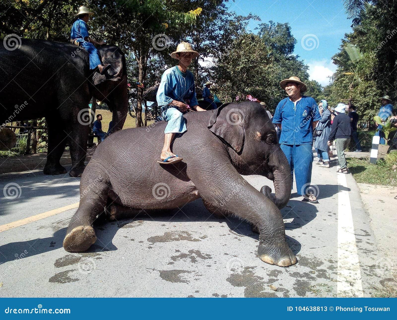 Download Olifant redactionele stock foto. Afbeelding bestaande uit thailand - 104638813