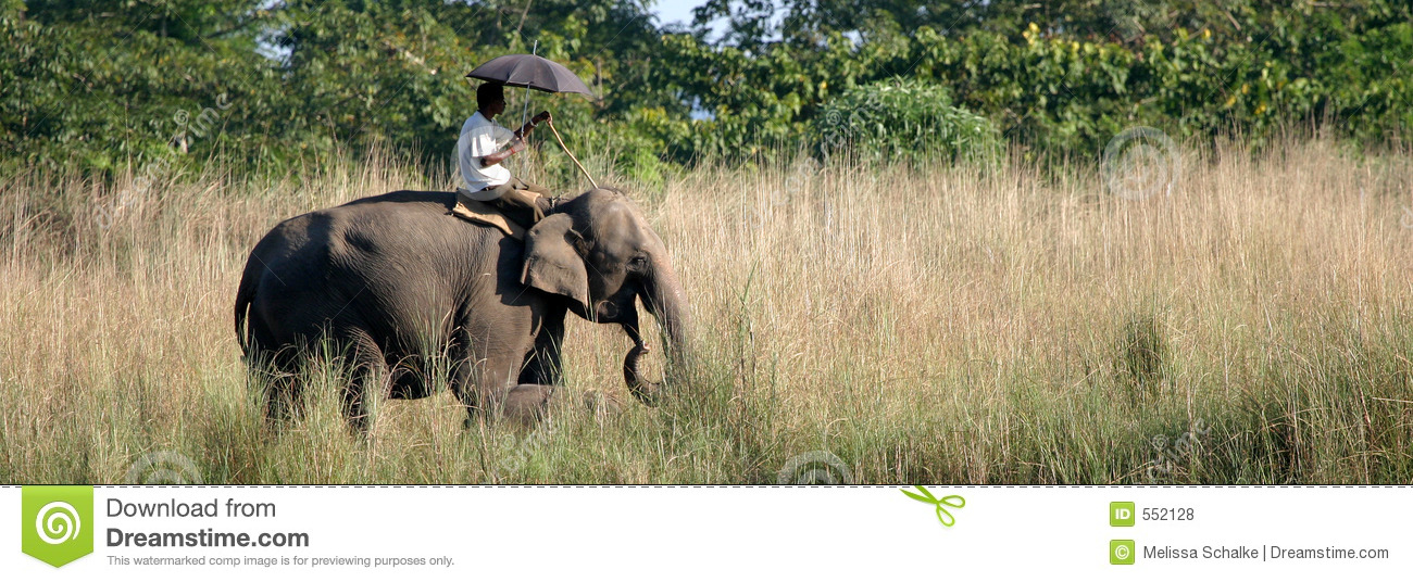 Olifant met Mahout