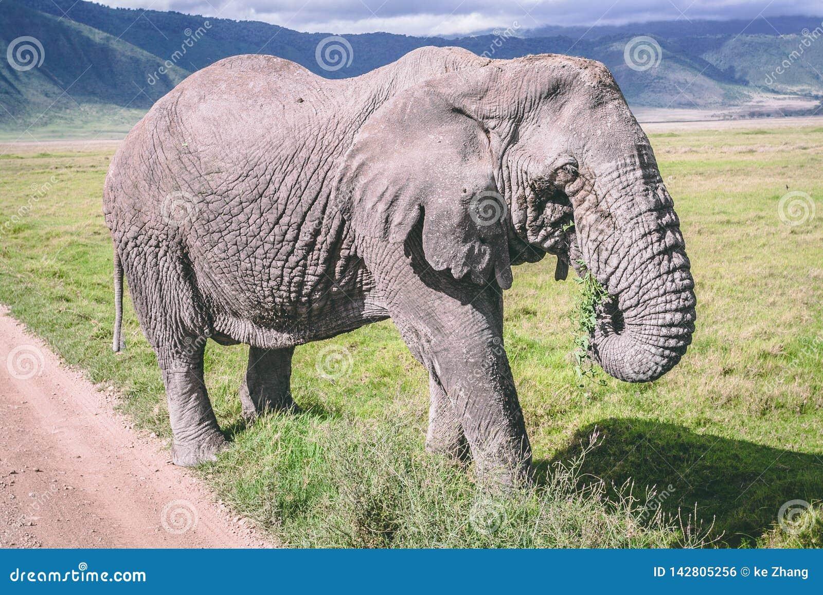 Olifant in ngorongorokrater Afrika