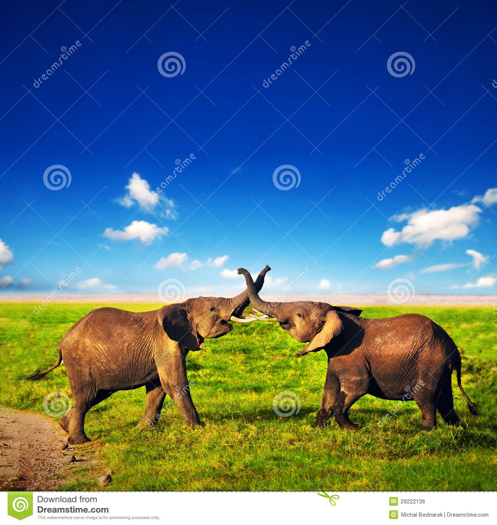 Olifanten die op savanne spelen. Safari in Amboseli, Kenia, Afrika