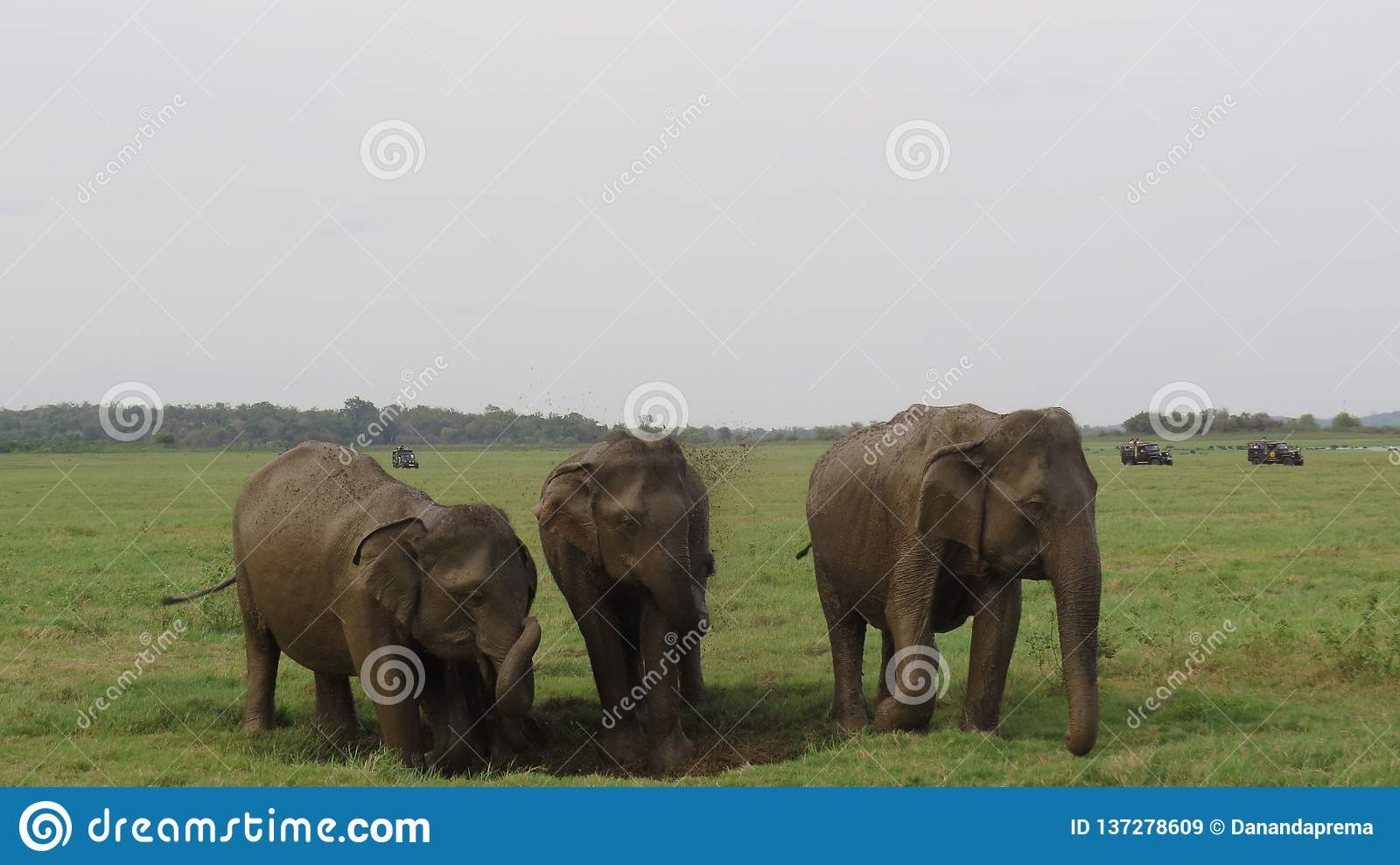 3 olifanten die van een modderbad samen genieten