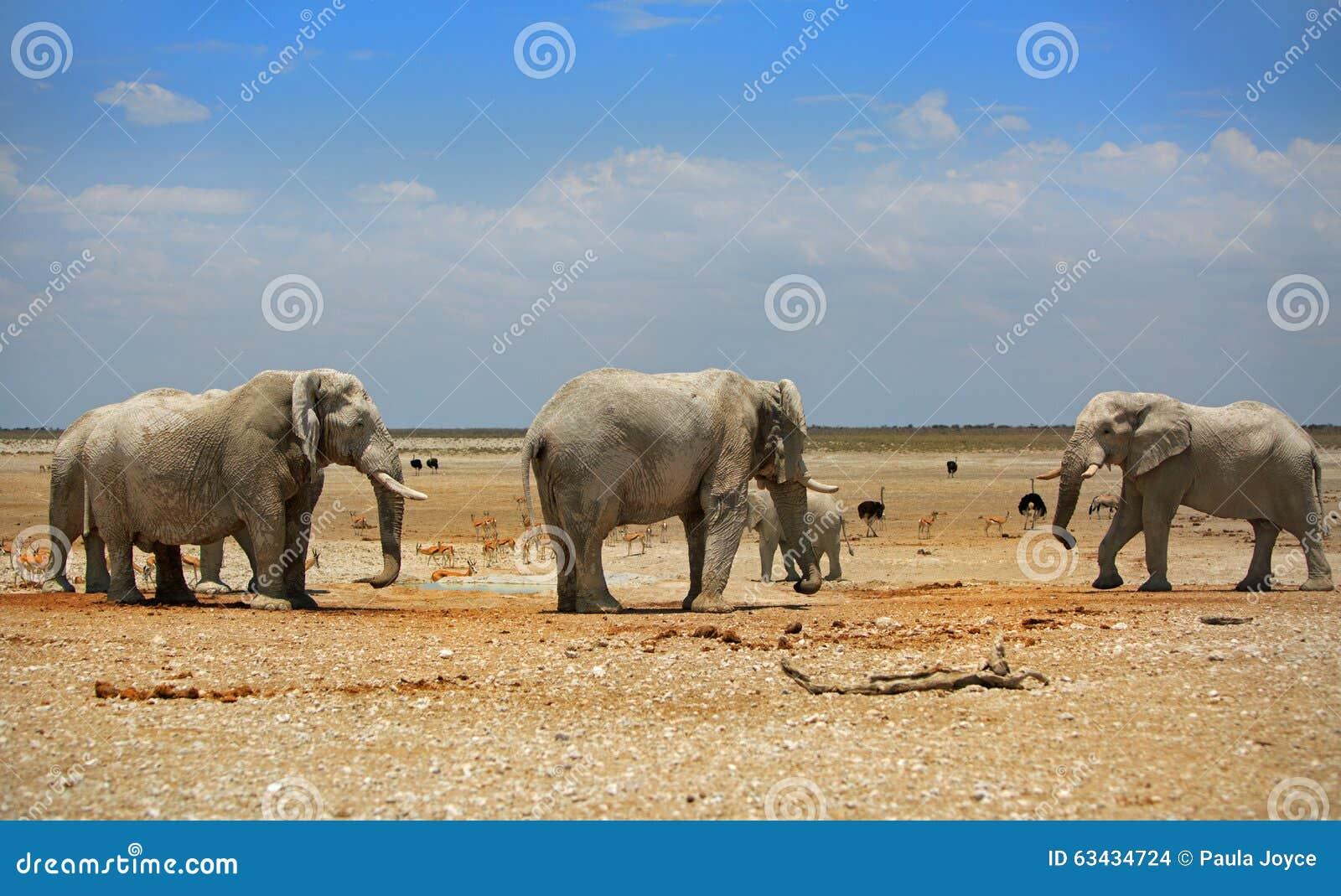 3 olifanten in Etosha met een briljante blauwe hemel