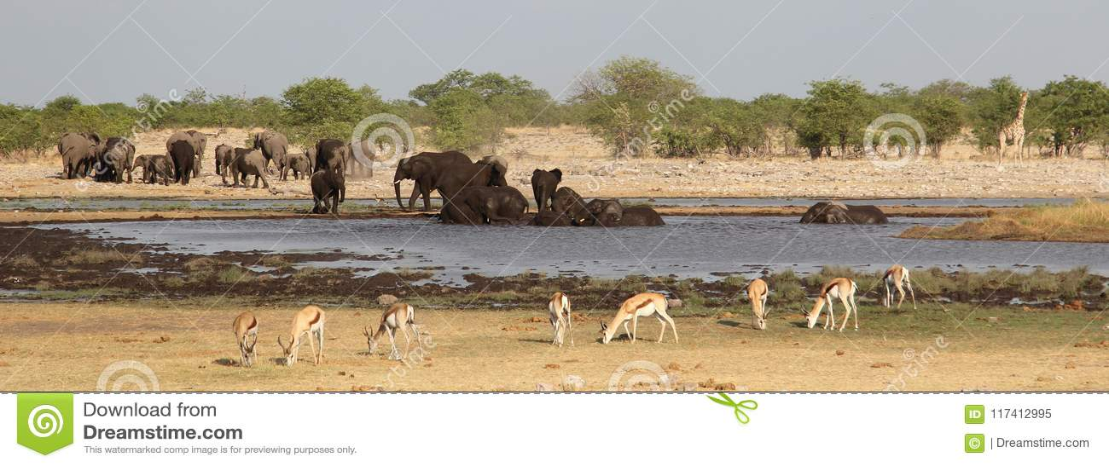 Olifanten, giraf en impala s rond waterhole