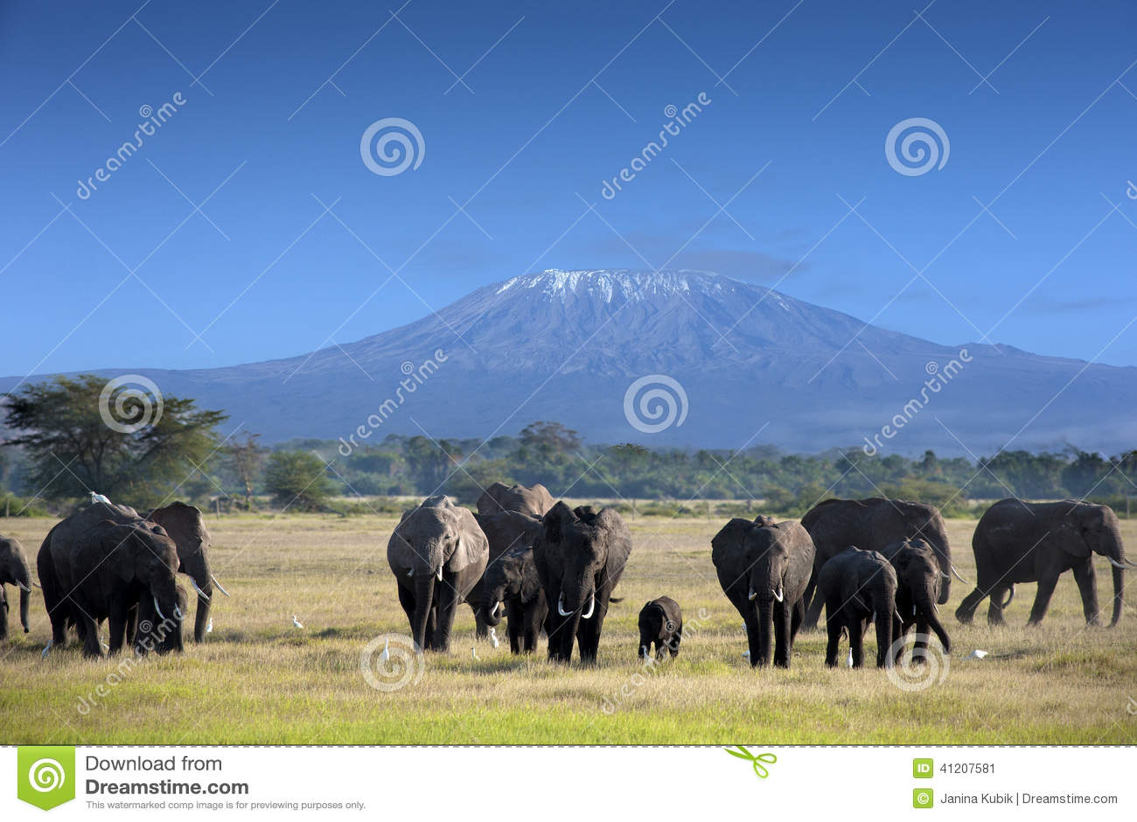 Olifanten in het Nationale Park van Kilimanjaro