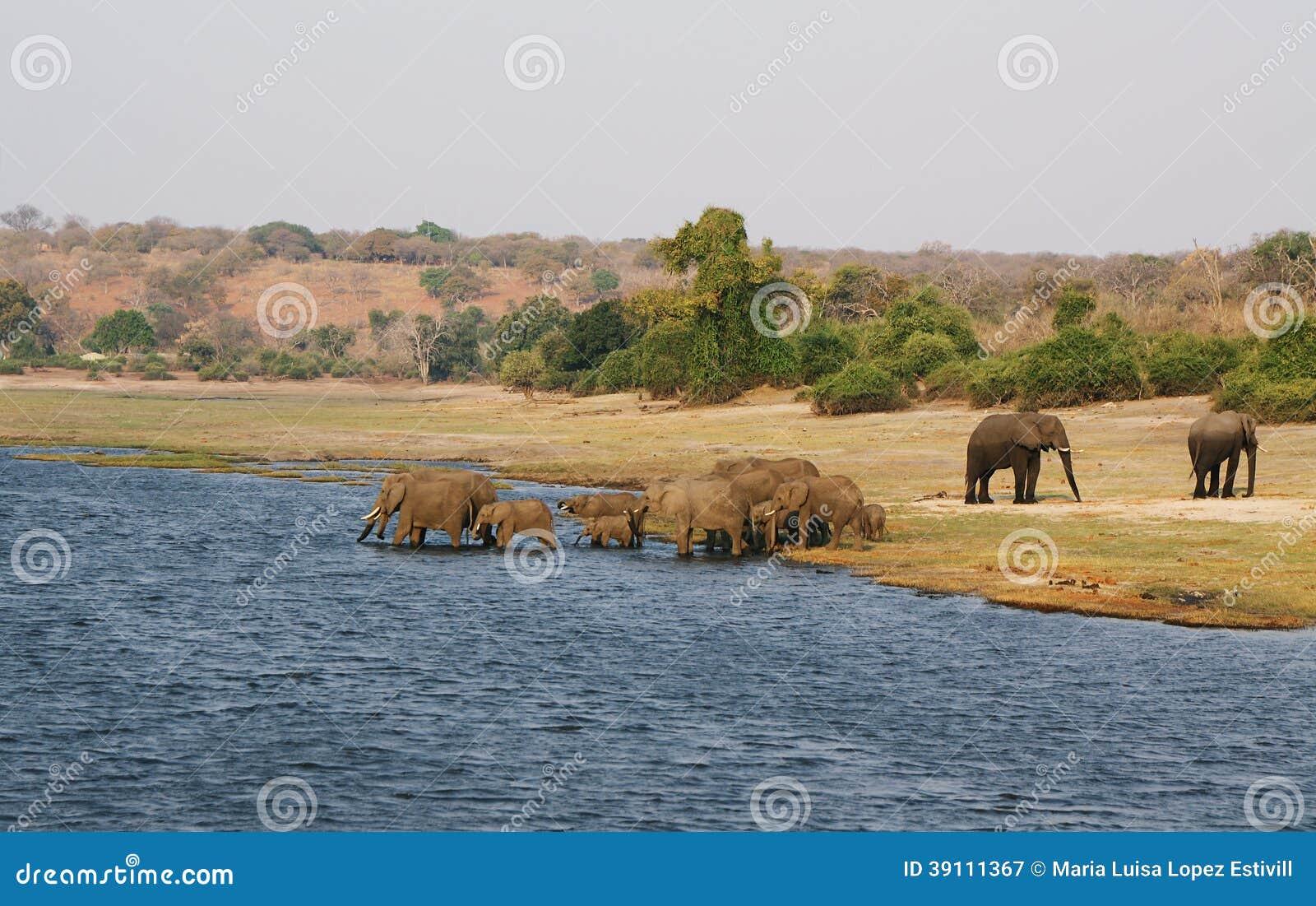 Olifantenfamilie in Chobe riverfront