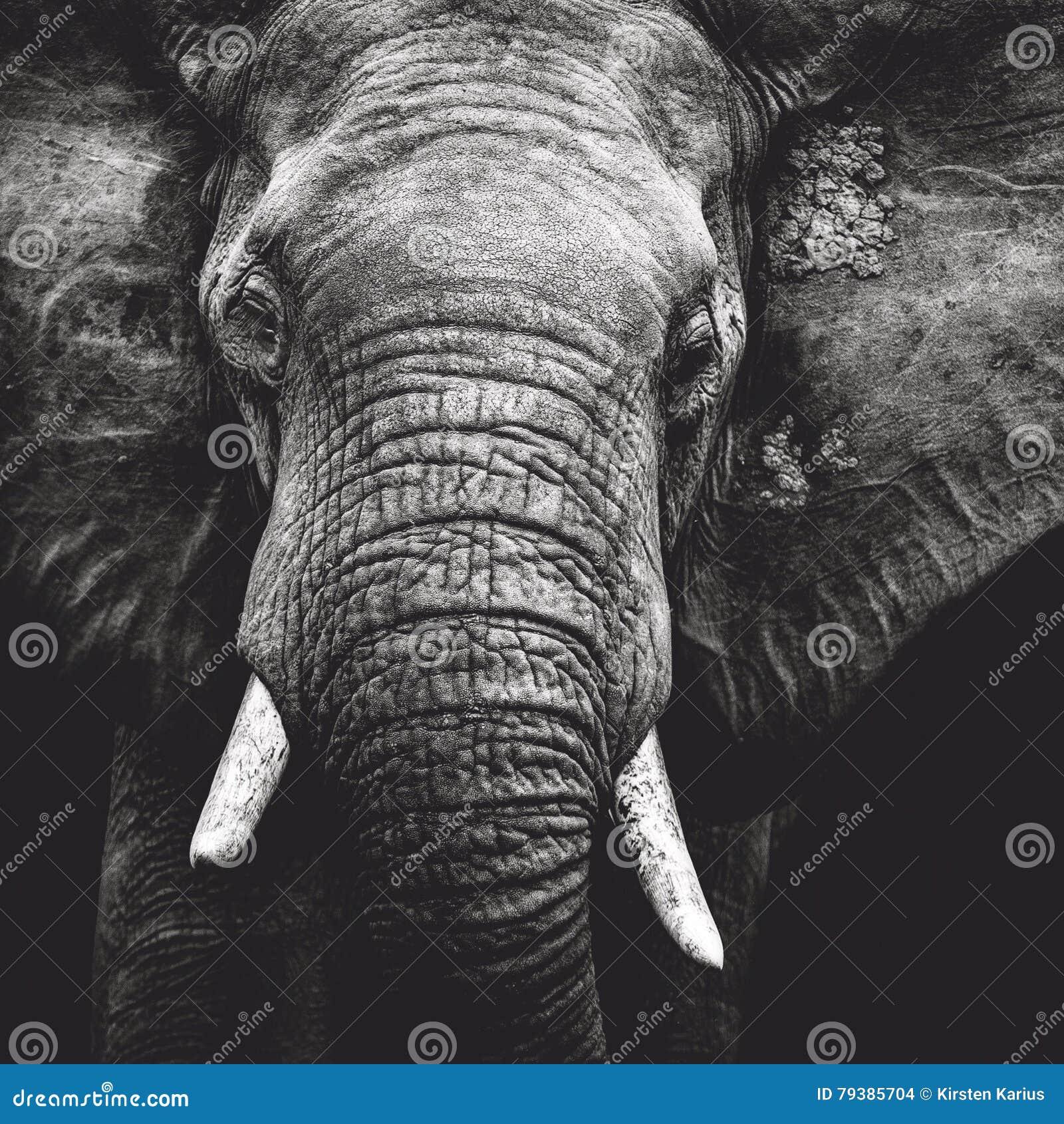 Olifantsportret
