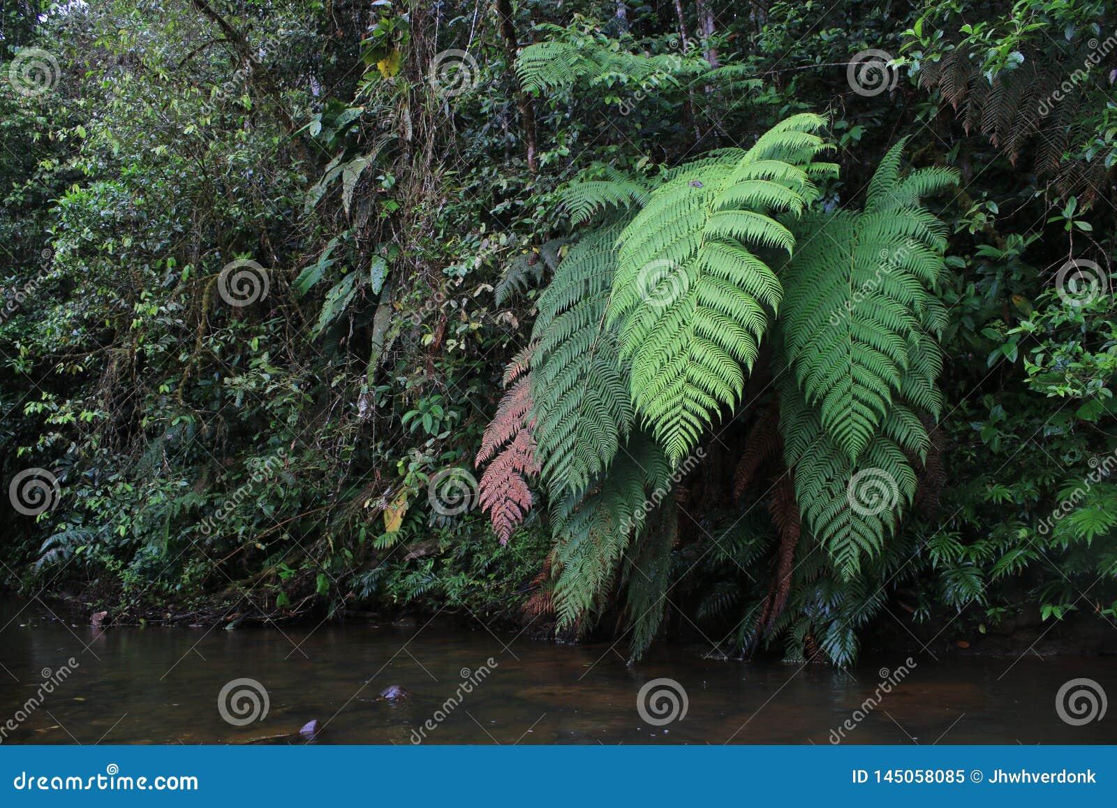 Olika färger av jättelika ormbunkar bredvid en flod i tropisk rainforest